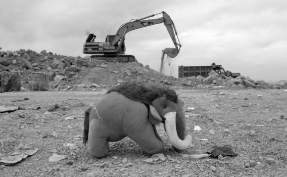 foto mamut en basurero de oaxaca
