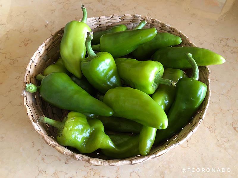 chiles endemicos de oaxaca