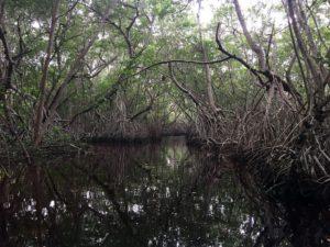 manglares yucatan celestun