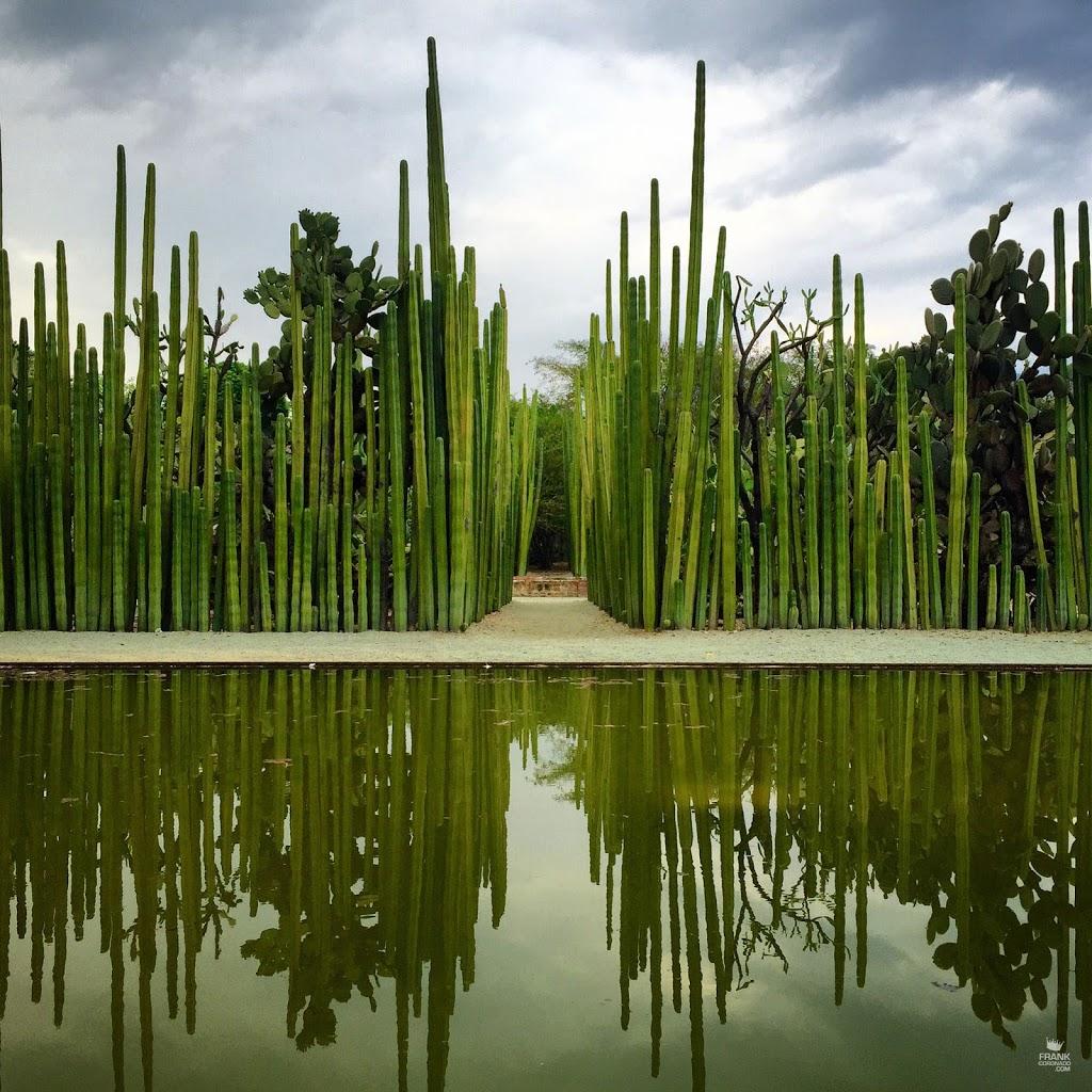 muro de cactus jardin etnobotanico de oaxaca