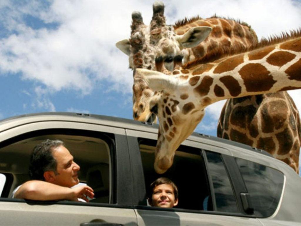 zoologicos en mexico, safari puebla, african safari