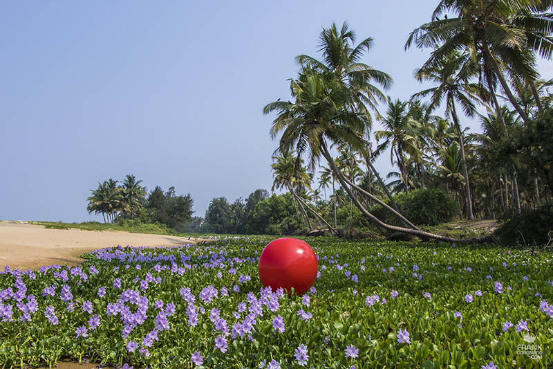 palm trees in kerala