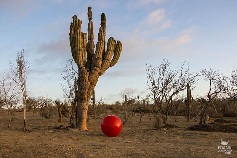 organo en desierto de mexico