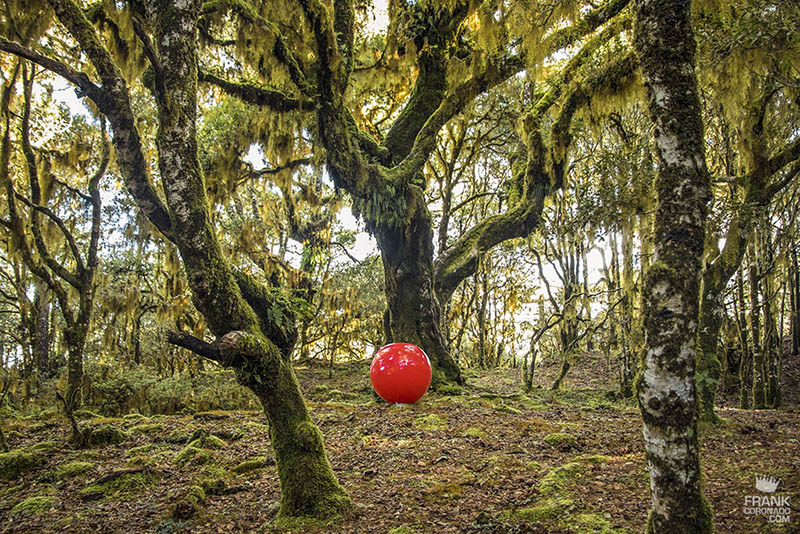 bosque mesofilo de oaxaca