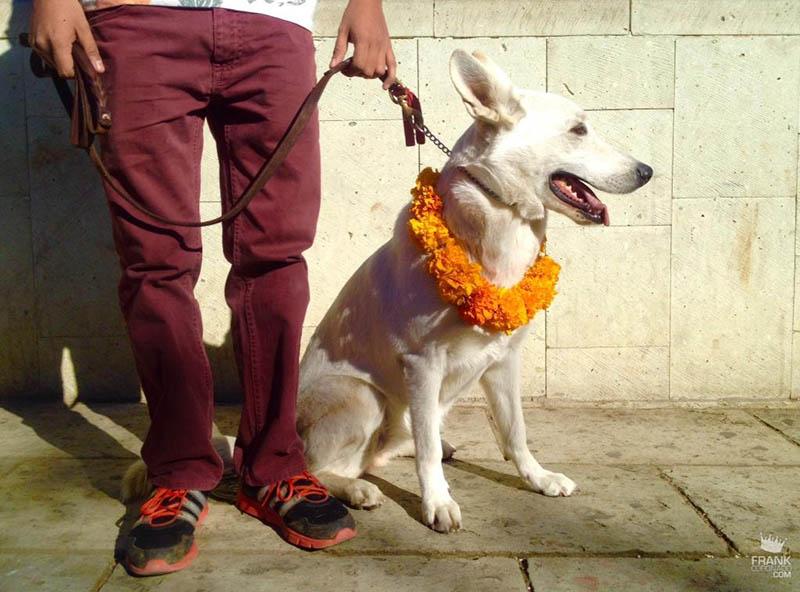 perro con collar de flores
