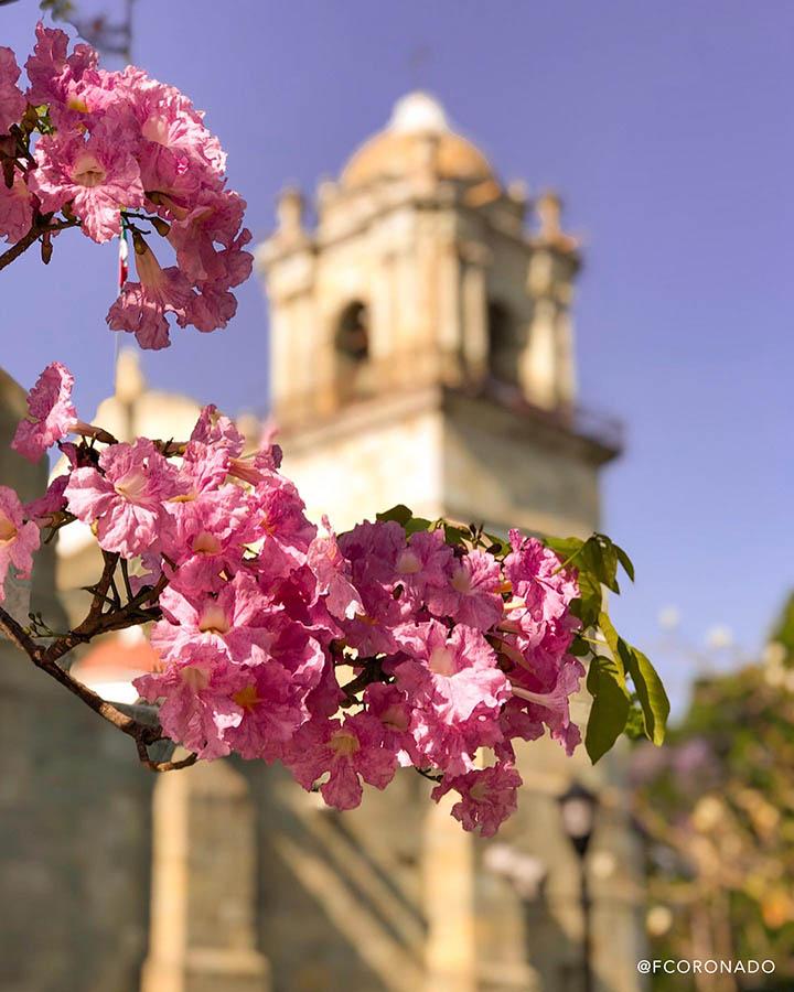 flore de guayacan