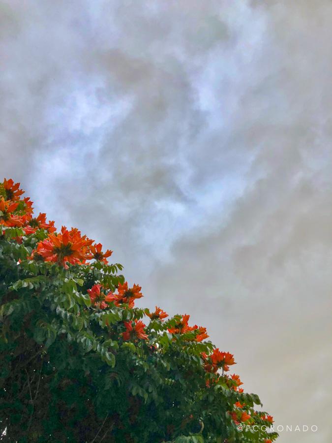 árboles de Oaxaca