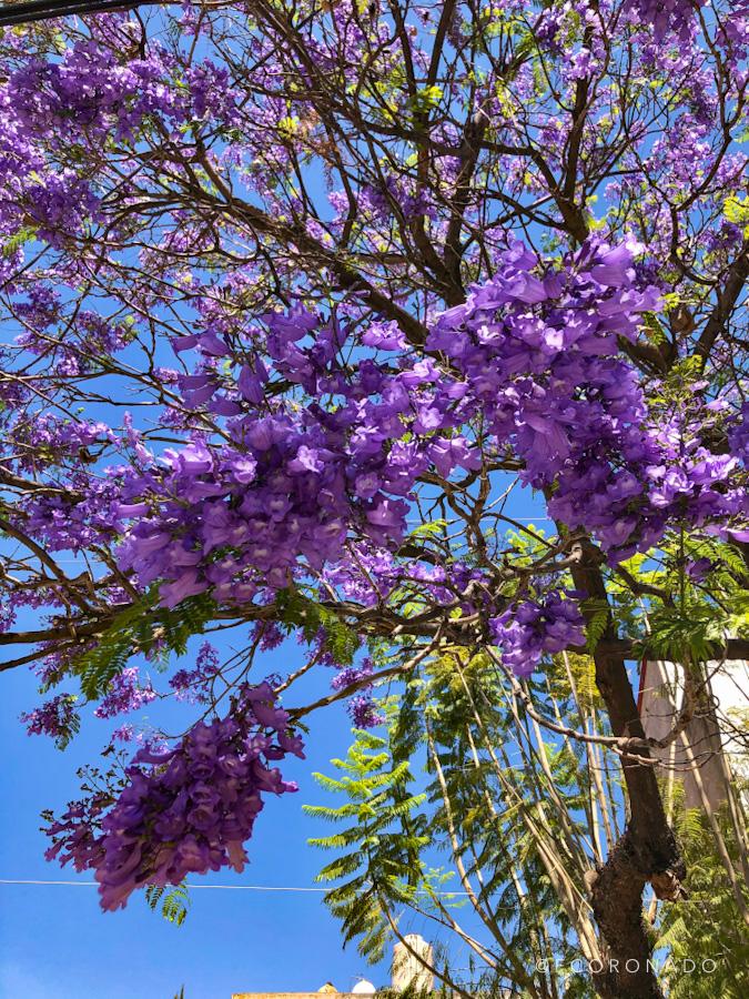 arbol de flores moradas