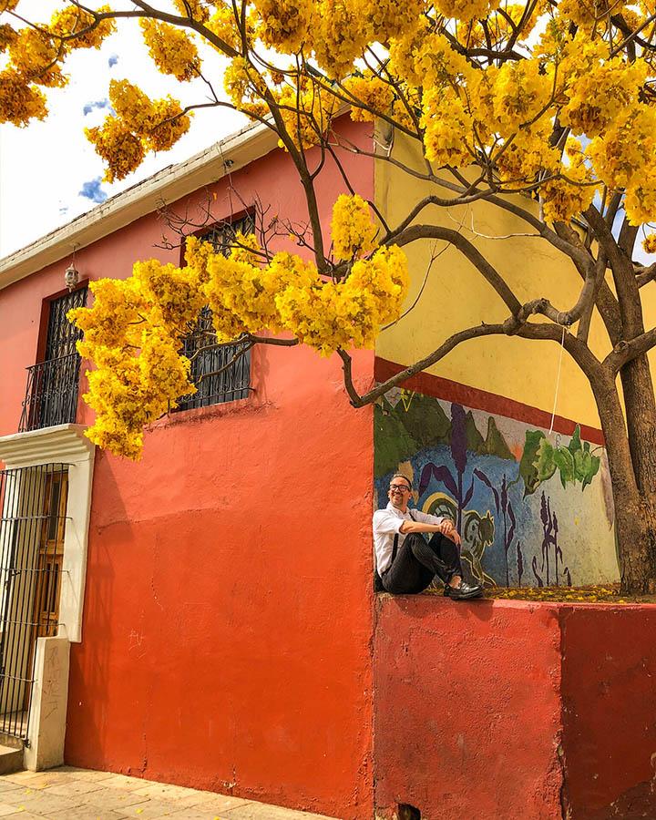 arbol de flor amarilla