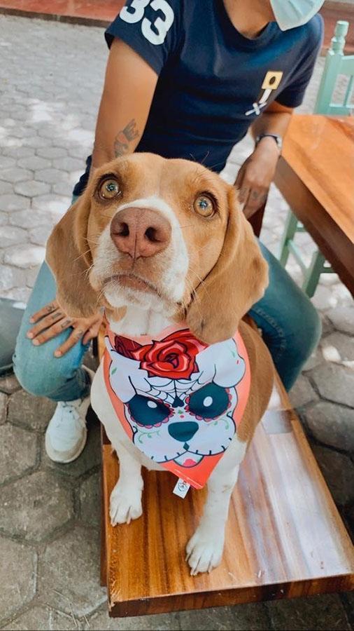 establecimientos pet friendly